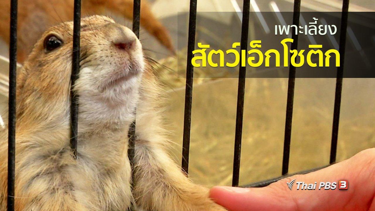 ทุกทิศทั่วไทย - อาชีพทั่วไทย : เพาะเลี้ยงสัตว์เอ็กโซติก