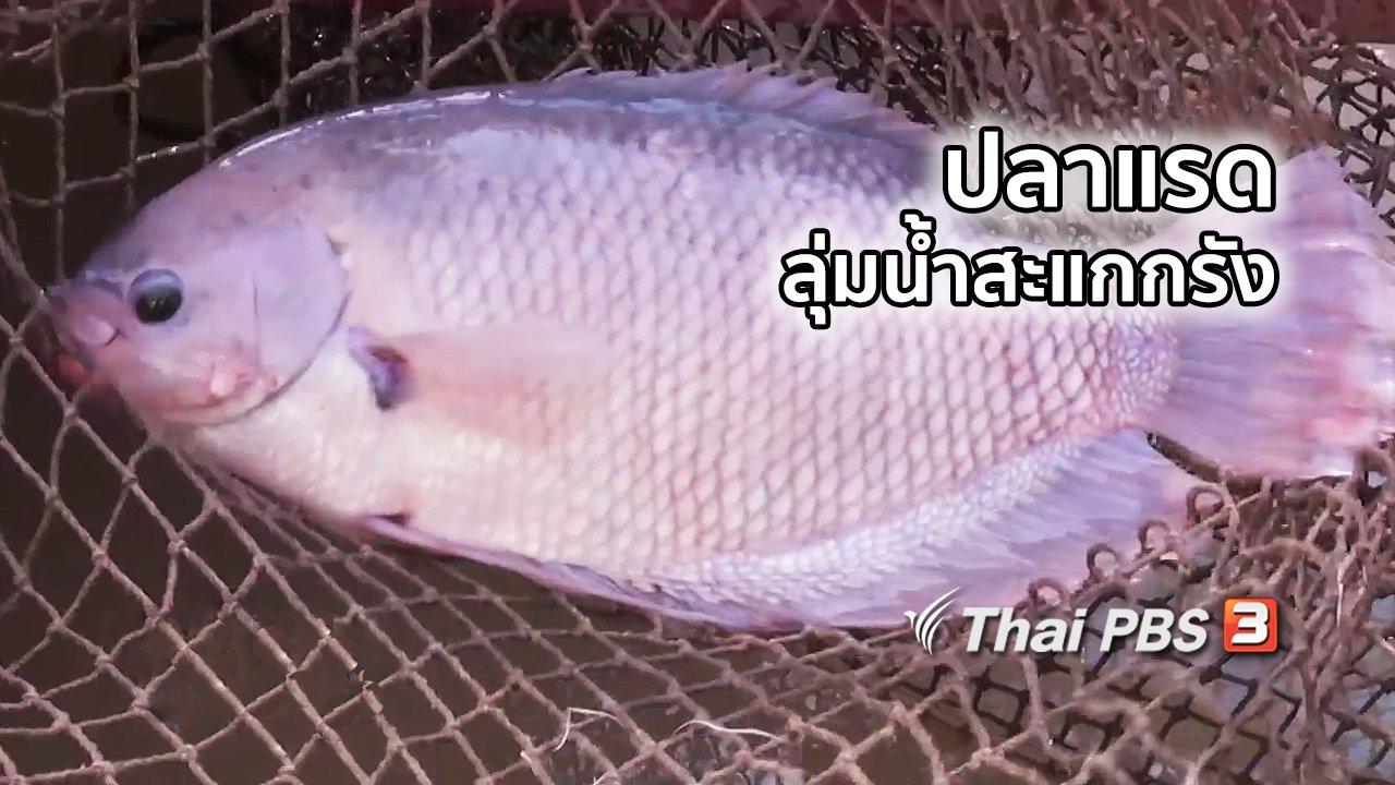 ไทยบันเทิง - อิ่มมนต์รส : ปลาแรดลุ่มน้ำสะแกกรัง