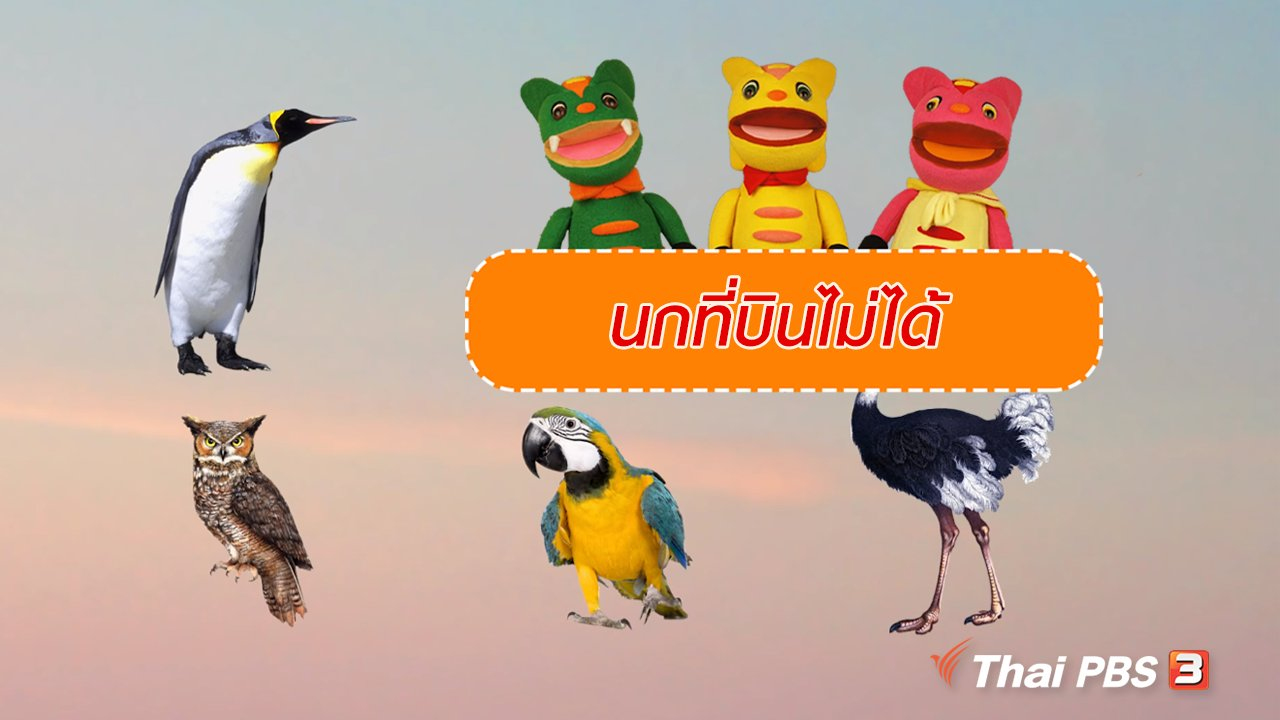 TataTitiToto ไดโนจอมป่วน - เกร็ดน่ารู้กับตาต้าตีตี้โตโต้ : นกที่บินไม่ได้
