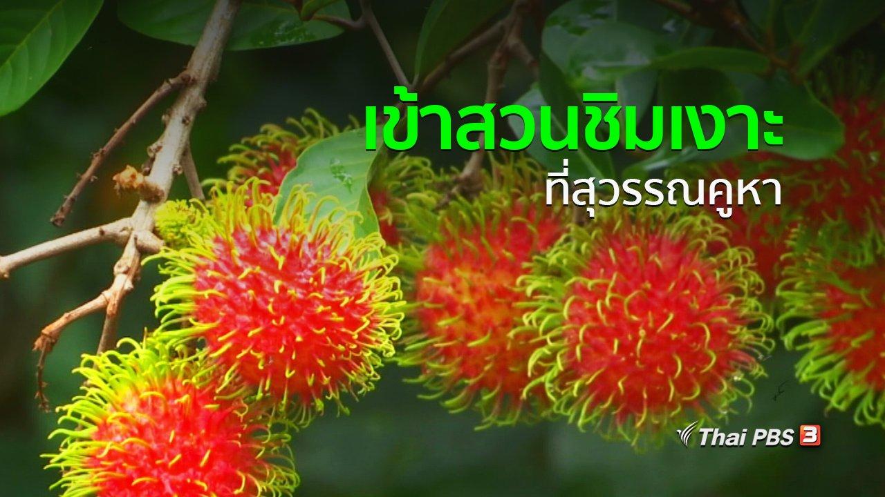 ทุกทิศทั่วไทย - อาชีพทั่วไทย : เข้าสวนชิมเงาะที่สุวรรณคูหา