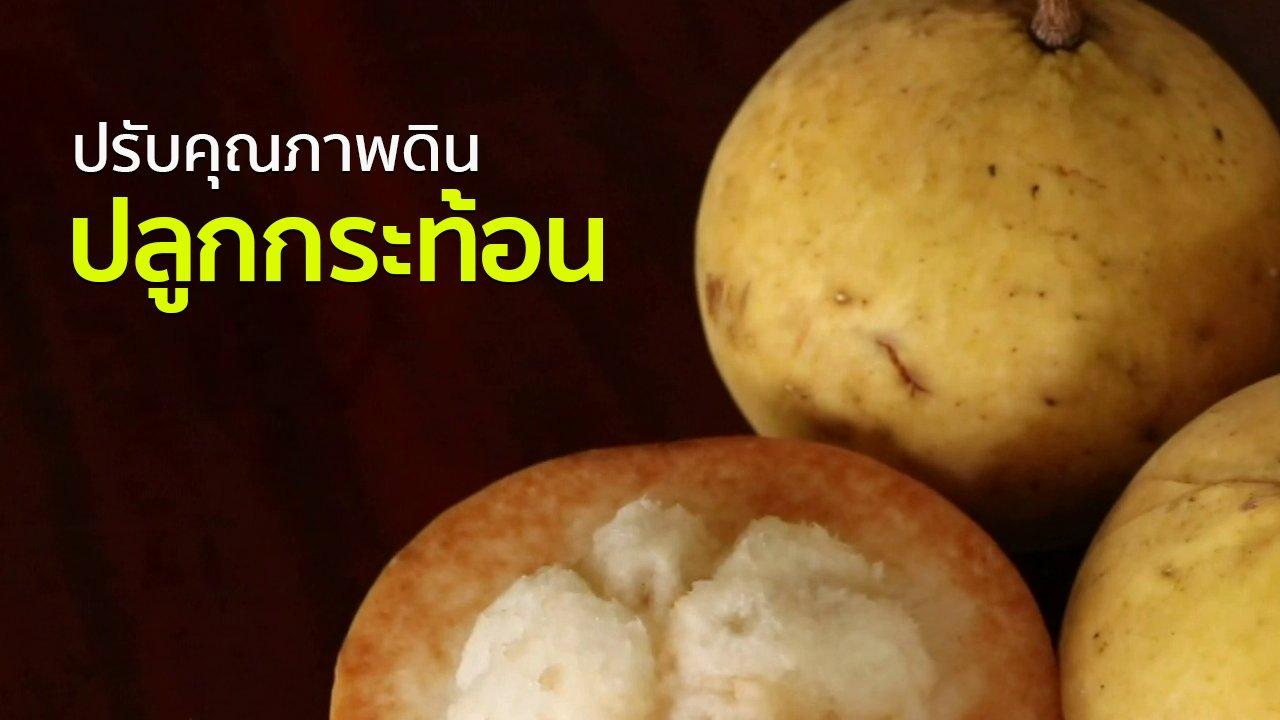 ทุกทิศทั่วไทย - อาชีพทั่วไทย : เกษตรกรราชบุรีปรับคุณภาพดินปลูกกระท้อน