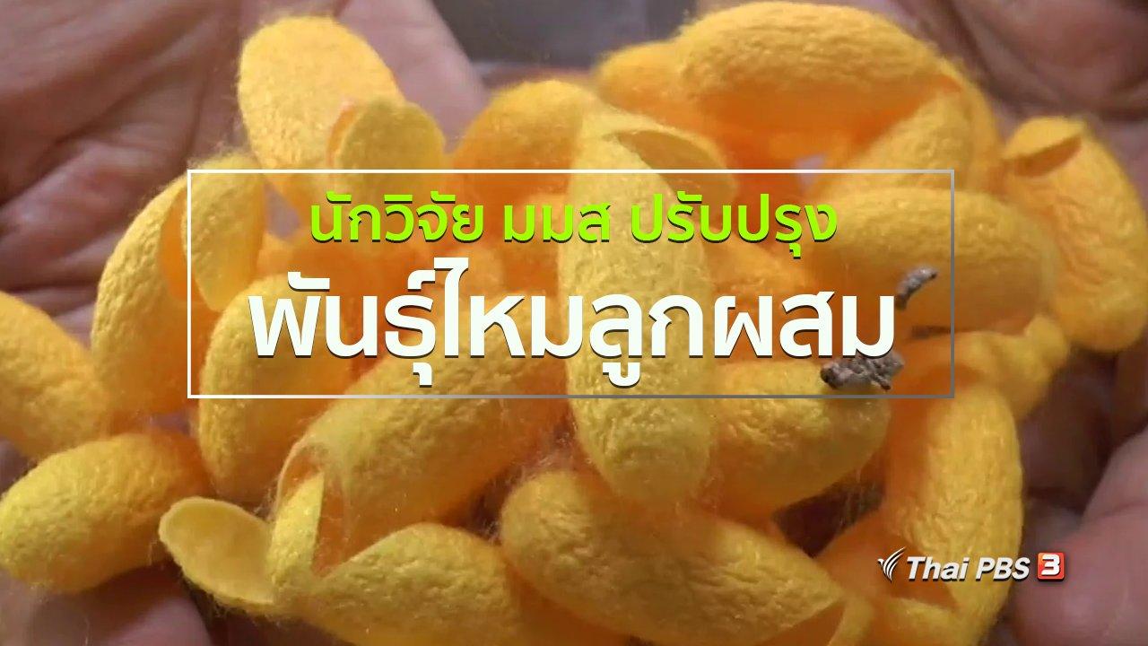 ทุกทิศทั่วไทย - ชุมชนทั่วไทย : นักวิจัย มมส ปรับปรุงพันธุ์ไหมลูกผสม