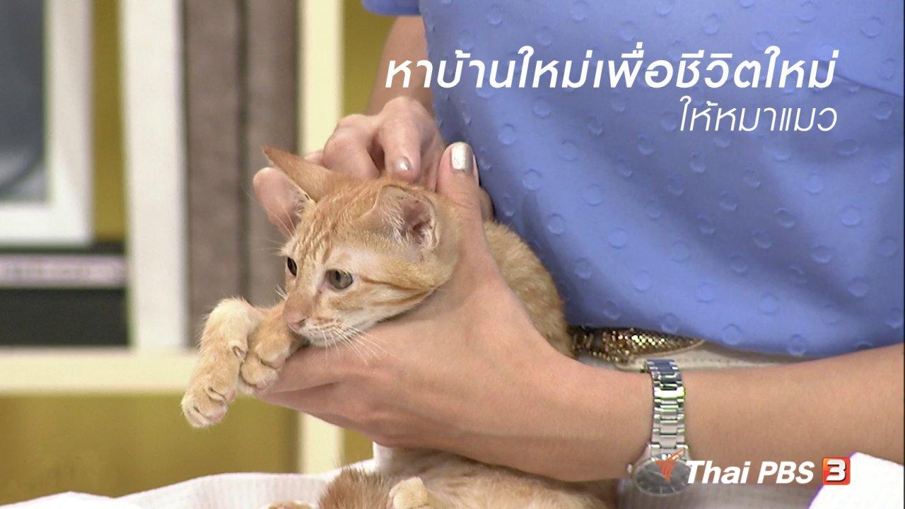 นารีกระจ่าง - นารีสนทนา : หาบ้านใหม่เพื่อชีวิตใหม่ให้หมาแมว