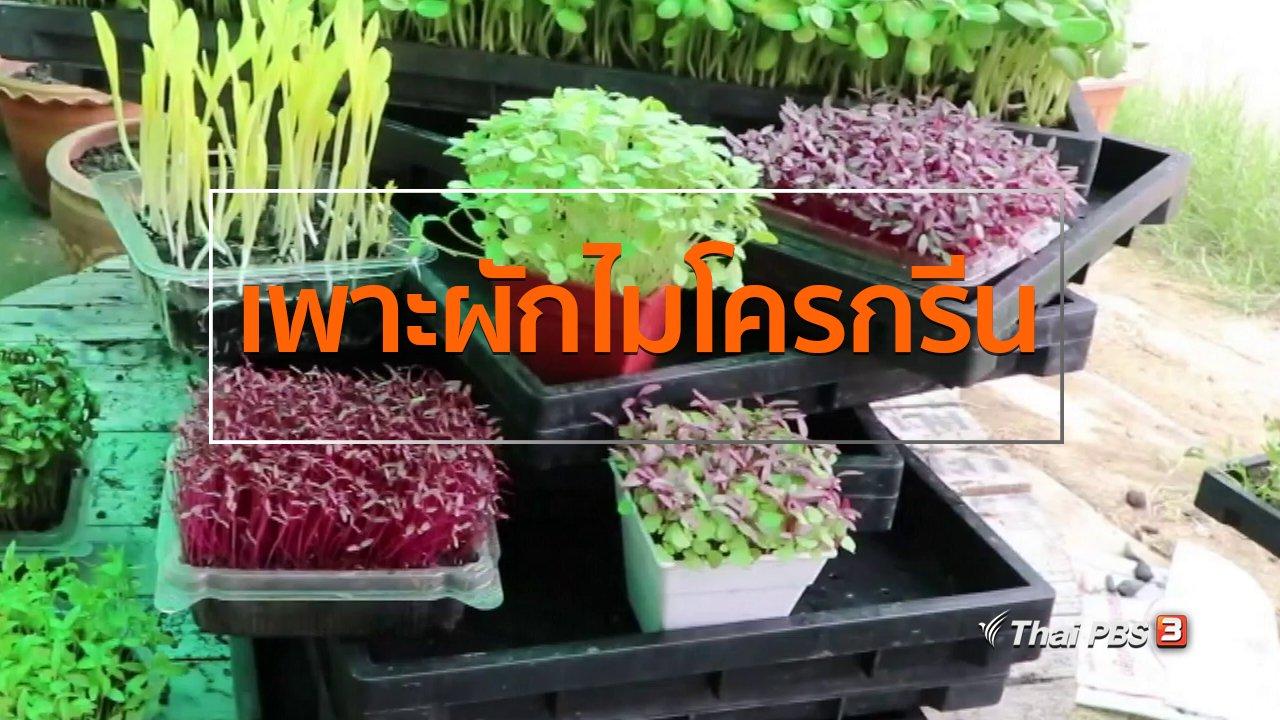 ทุกทิศทั่วไทย - อาชีพทั่วไทย : สาวบ้านโป่งเพาะผักไมโครกรีนขาย