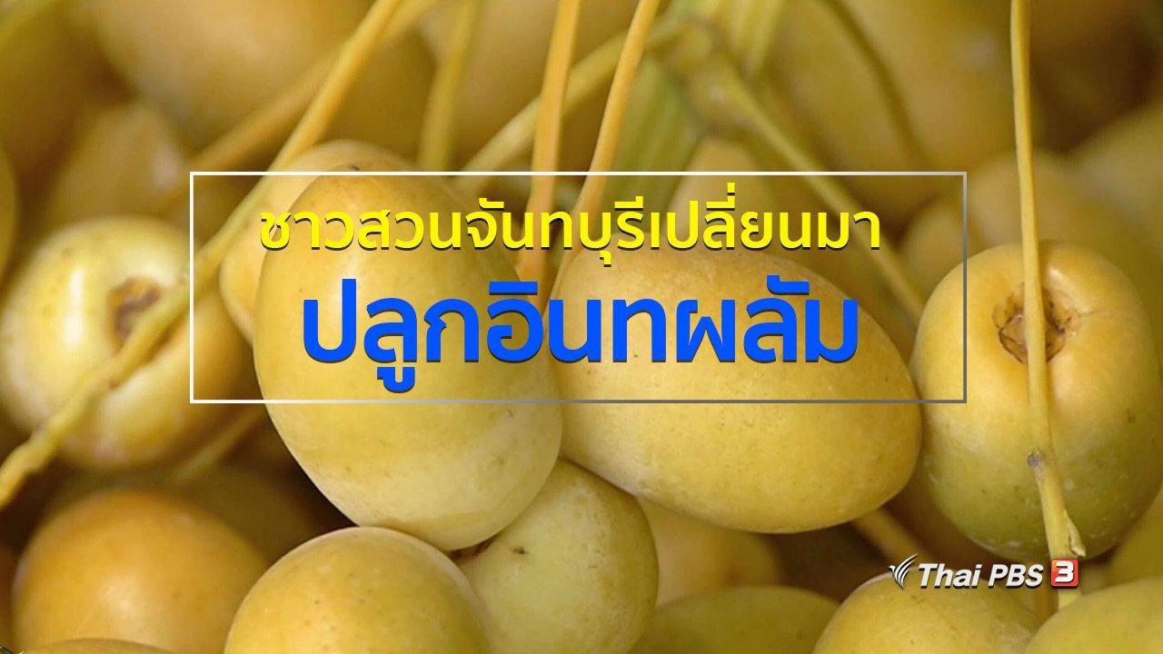 ทุกทิศทั่วไทย - อาชีพทั่วไทย : ชาวสวนจันทบุรีเปลี่ยนมาปลูกอินทผลัม