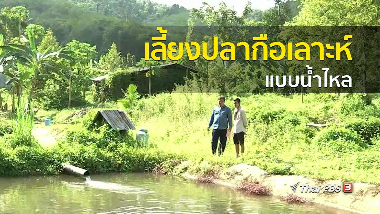 ทุกทิศทั่วไทย - วิถีทั่วไทย : เลี้ยงปลากือเลาะห์แบบน้ำไหล