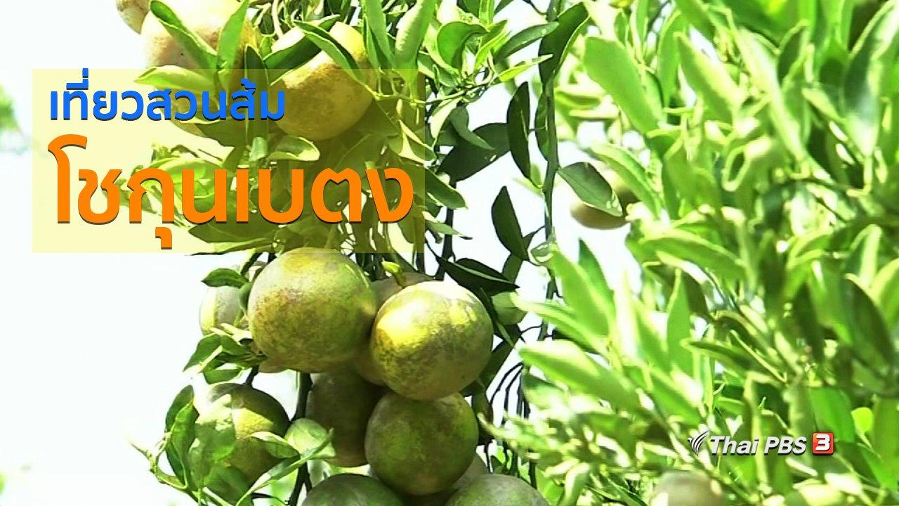 ทุกทิศทั่วไทย - วิถีทั่วไทย : เที่ยวสวนส้มโชกุนเบตง