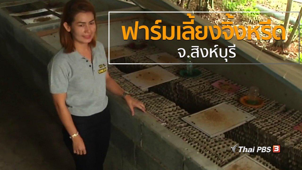 ทุกทิศทั่วไทย - วิถีทั่วไทย : ฟาร์มเลี้ยงจิ้งหรีด จ.สิงห์บุรี