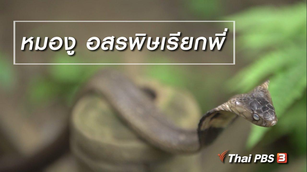 ลุยไม่รู้โรย สูงวัยดี๊ดี - สูงวัยไทยแลนด์ : หมองู อสรพิษเรียกพี่