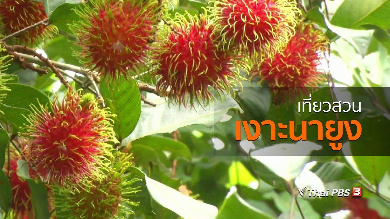 ทุกทิศทั่วไทย - ชุมชนทั่วไทย : เที่ยวสวนเงาะนายูง