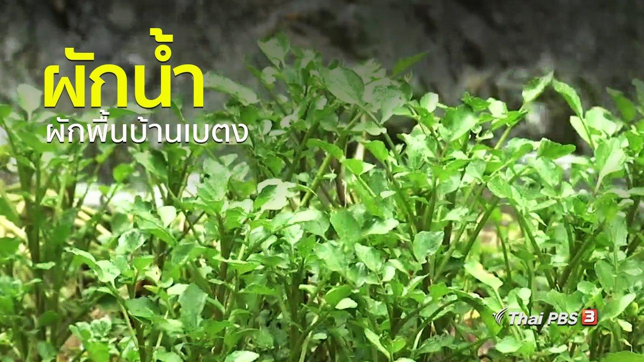 ทุกทิศทั่วไทย - วิถีทั่วไทย : ผักน้ำ ผักพื้นบ้านเบตง
