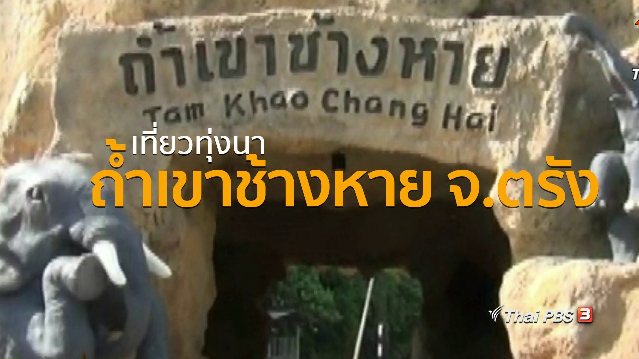 ทุกทิศทั่วไทย - ชุมชนทั่วไทย : เที่ยวทุ่งนาถ้ำเขาช้างหาย จ.ตรัง