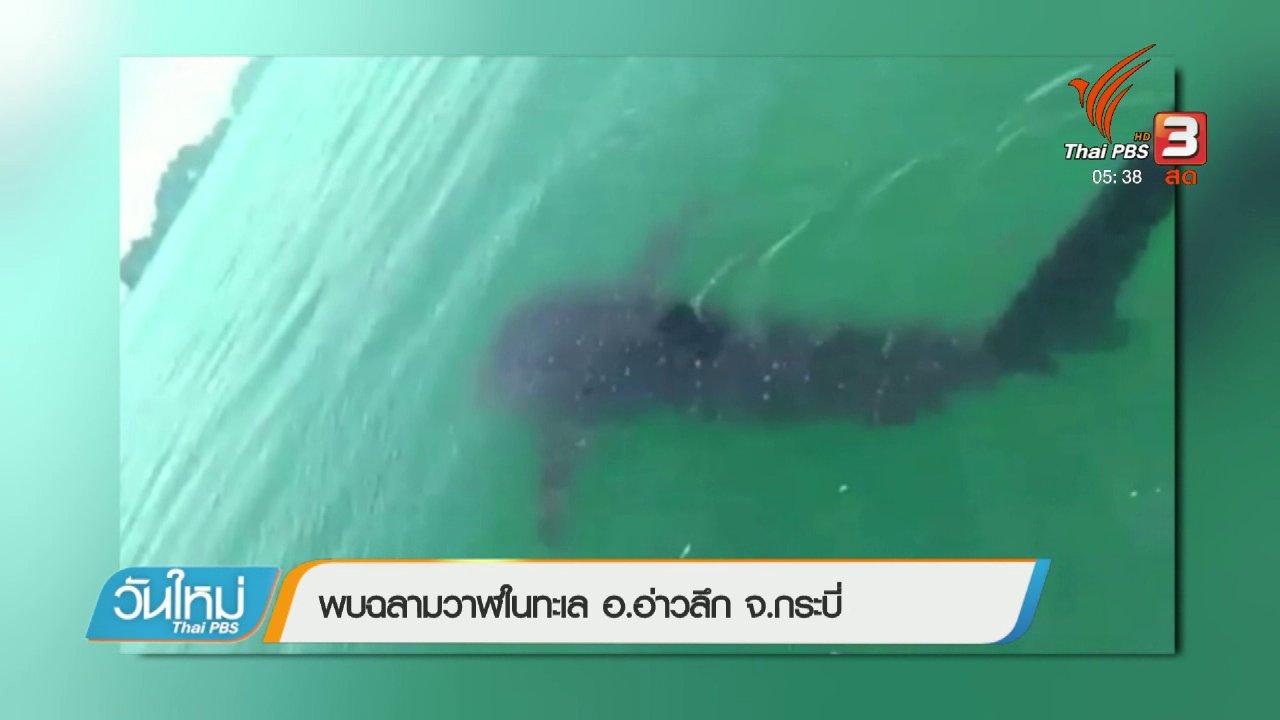 วันใหม่  ไทยพีบีเอส - พบฉลามวาฬในทะเล อ.อ่าวลึก จ.กระบี่