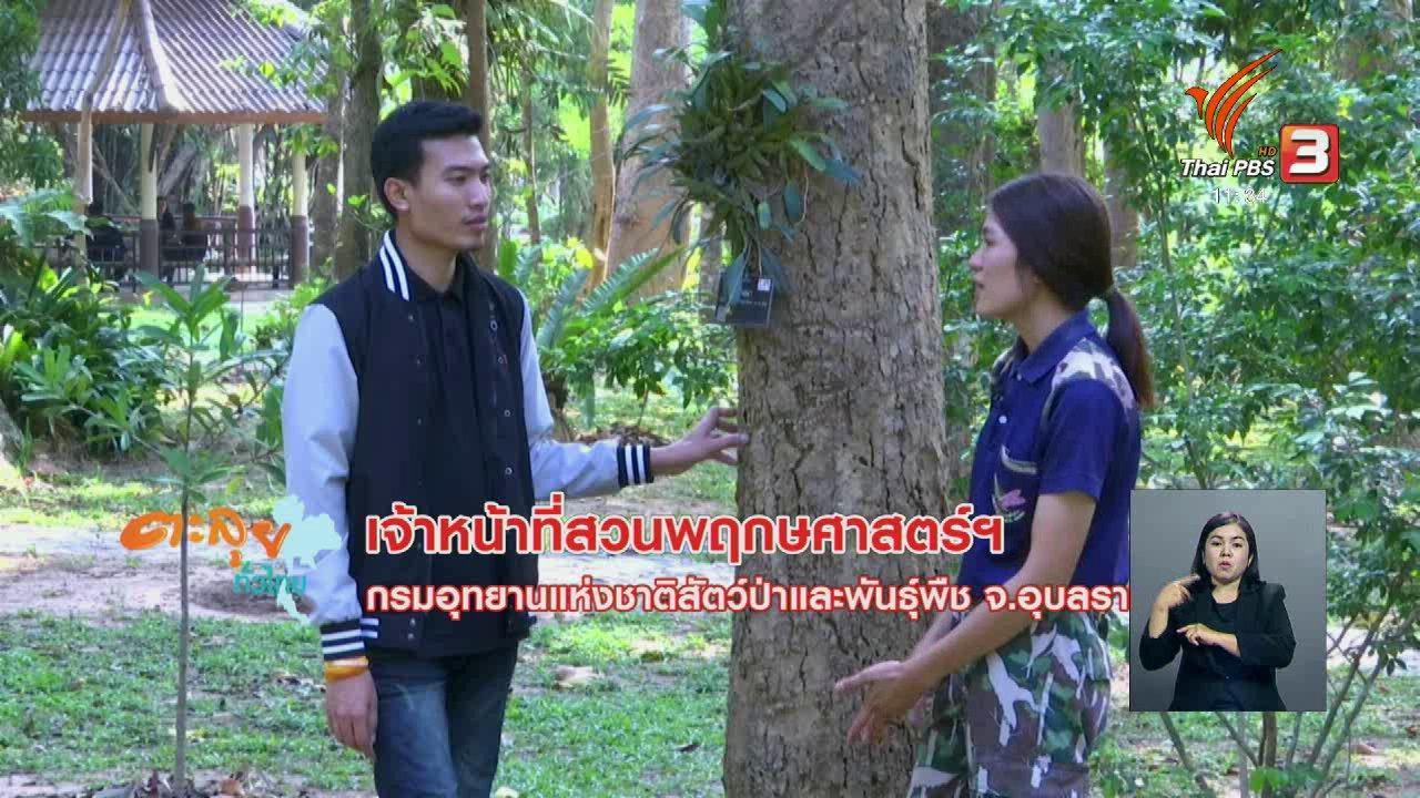 จับตาสถานการณ์ - ตะลุยทั่วไทย : ป่าดงฟ้าห่วน