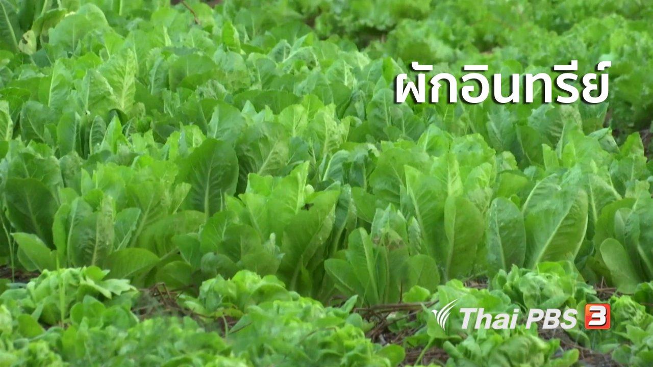 จับตาสถานการณ์ - ตะลุยทั่วไทย : ผักอินทรีย์