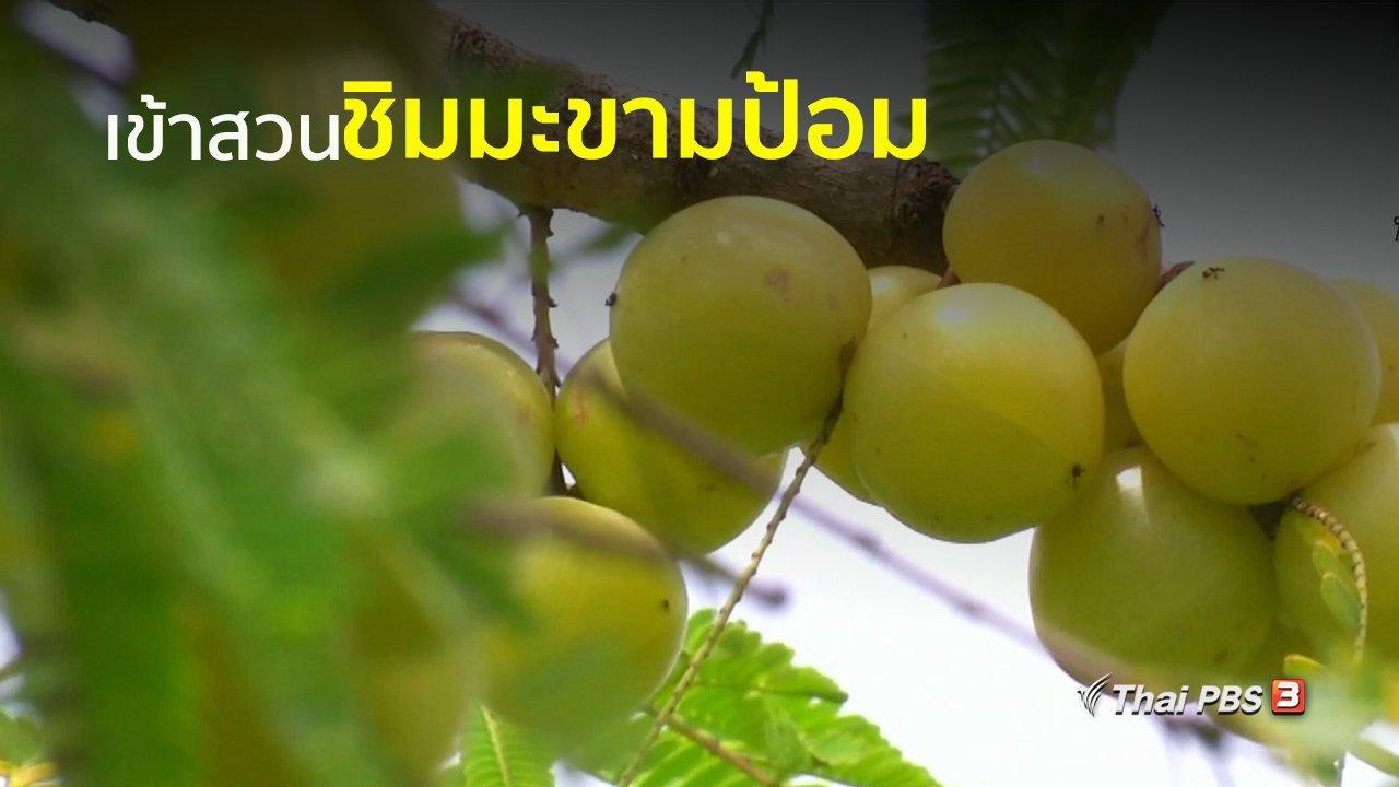 ทุกทิศทั่วไทย - อาชีพทั่วไทย : ปลูกมะขามป้อม