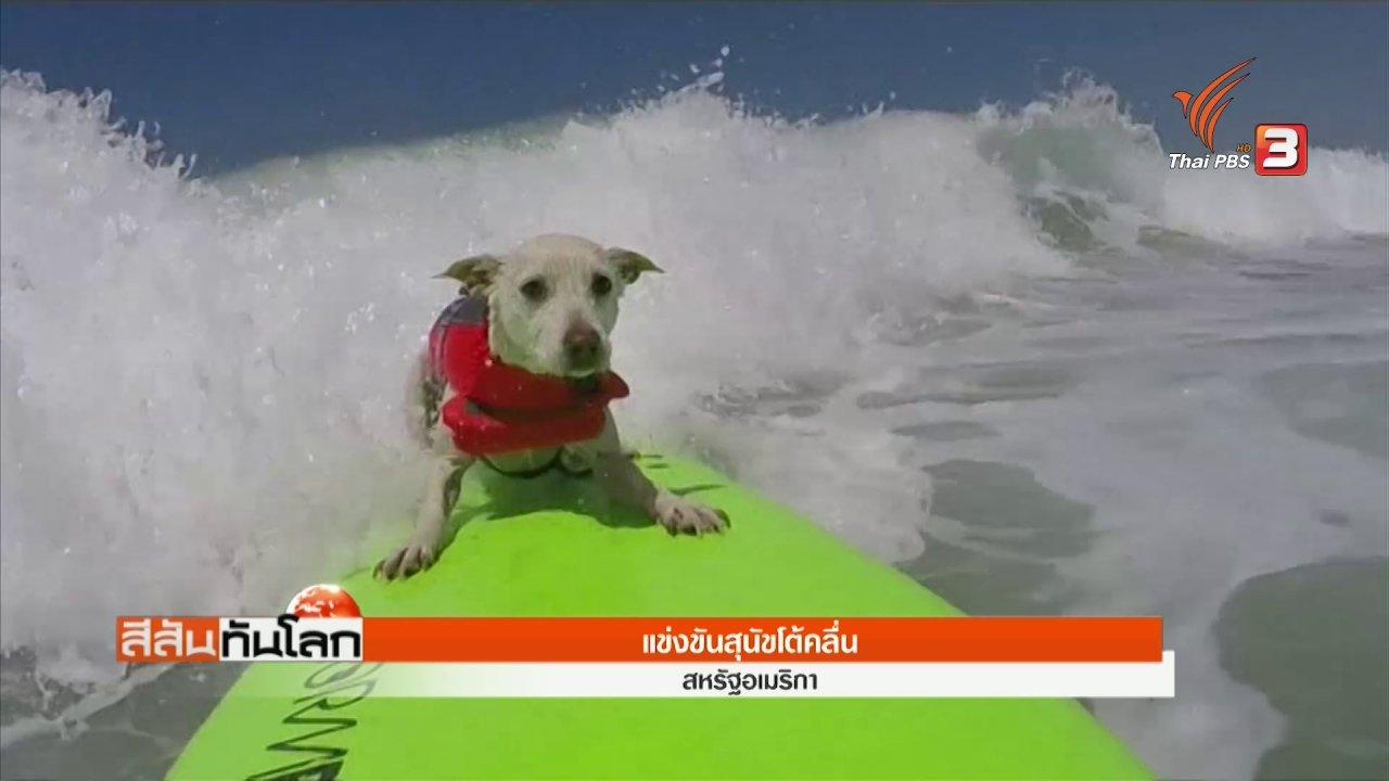 สีสันทันโลก - การแข่งขันสุนัขโต้คลื่น