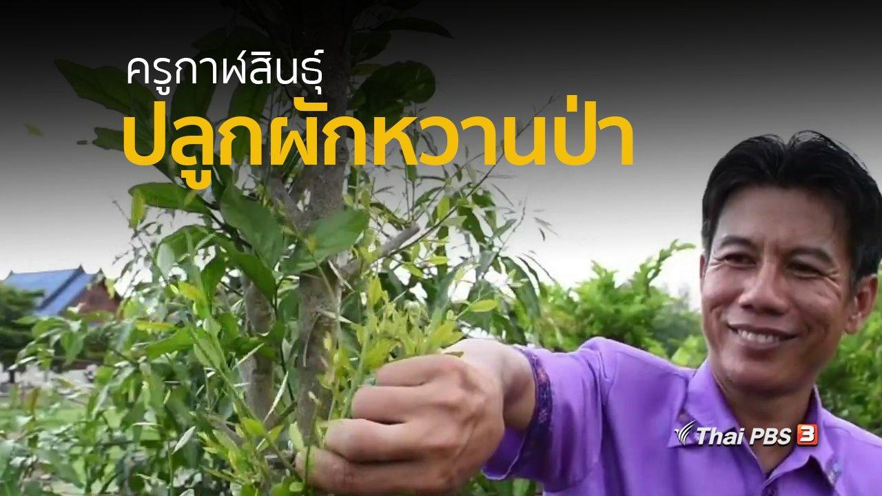 ทุกทิศทั่วไทย - อาชีพทั่วไทย : ครูกาฬสินธุ์ปลูกผักหวานป่าเตรียมพร้อมก่อนเกษียณ