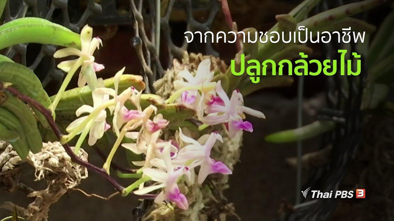 ทุกทิศทั่วไทย - อาชีพทั่วไทย : เกษตรกรรุ่นใหม่ปลูกกล้วยไม้