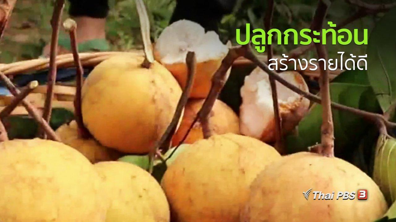 ทุกทิศทั่วไทย - อาชีพทั่วไทย : ปลูกกระท้อน