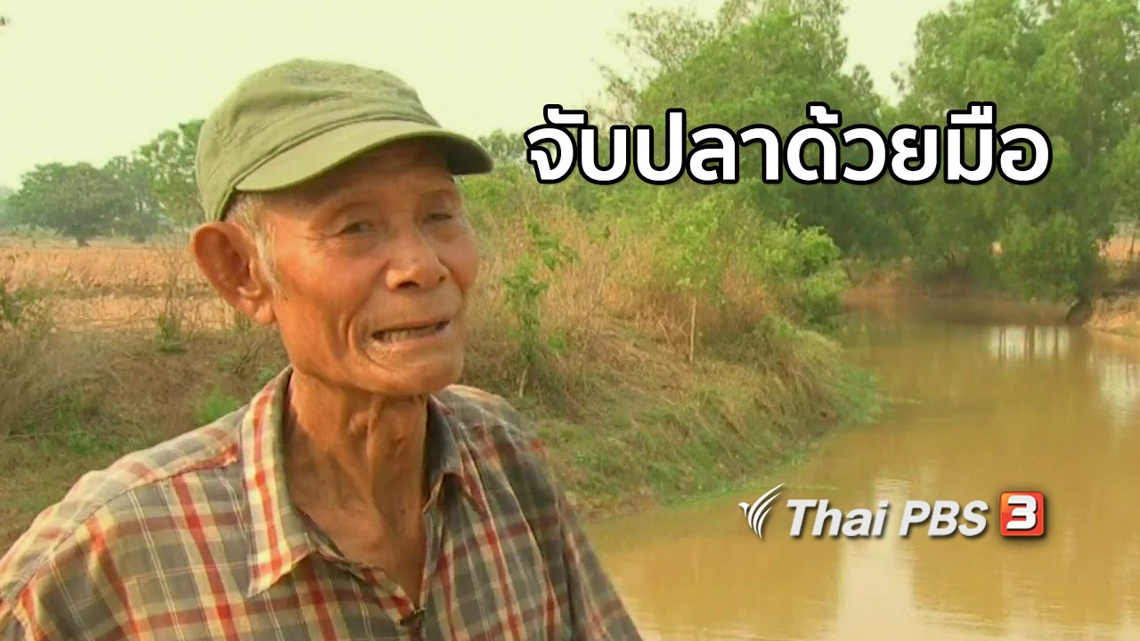 จับตาสถานการณ์ - ตะลุยทั่วไทย  จับปลาด้วยมือ