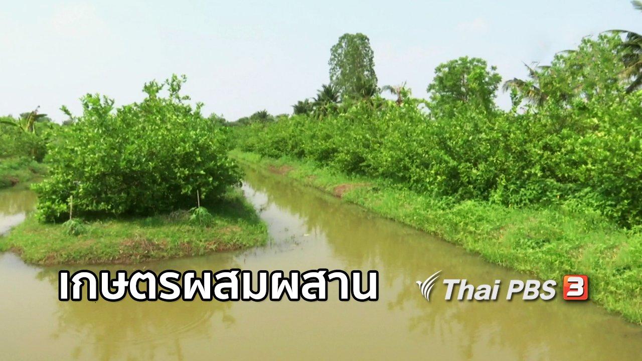จับตาสถานการณ์ - ตะลุยทั่วไทย : เกษตรผสมผสาน อ.บึงสามัคคี จ.กำแพงเพชร