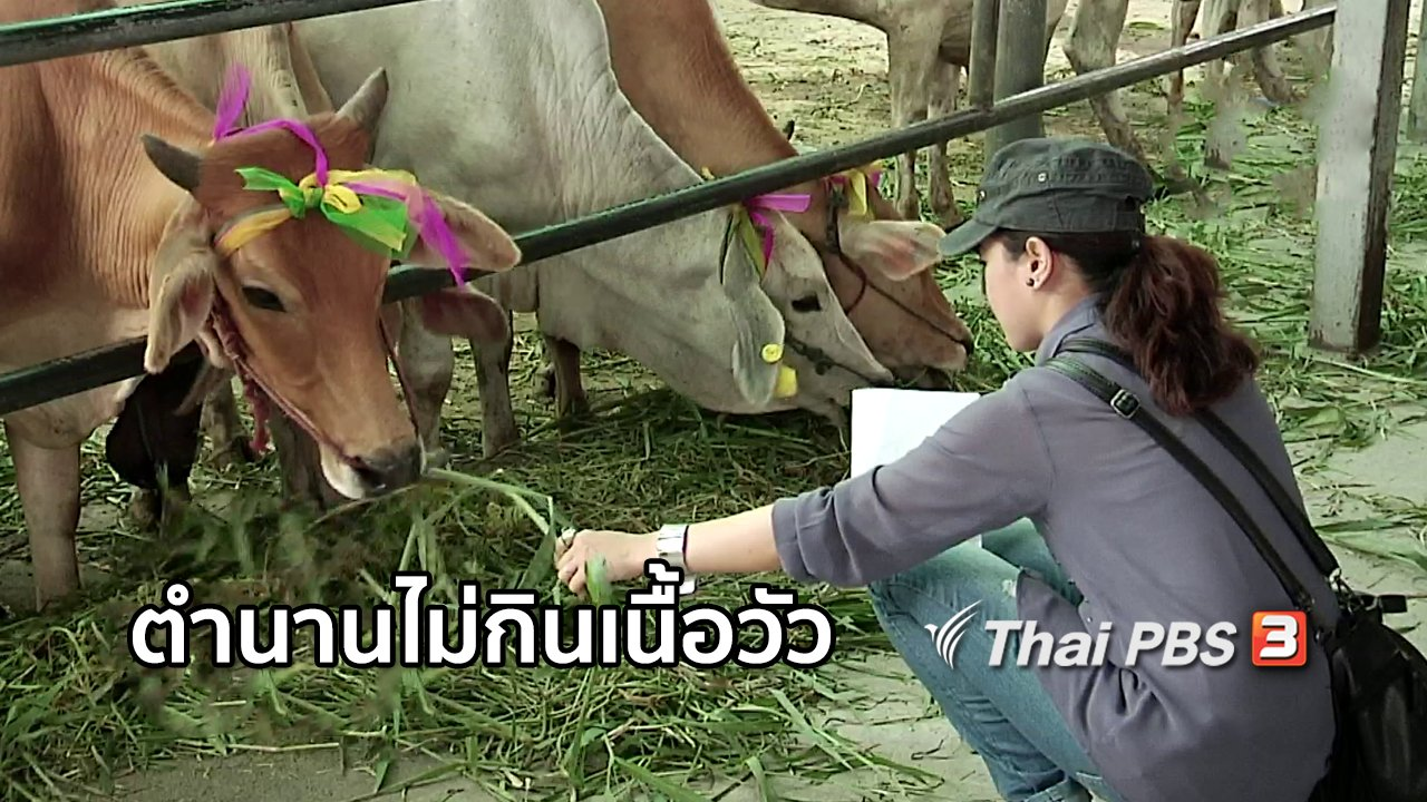 ไทยบันเทิง - เรื่องนี้มีตำนาน : ตำนานไม่กินเนื้อวัว