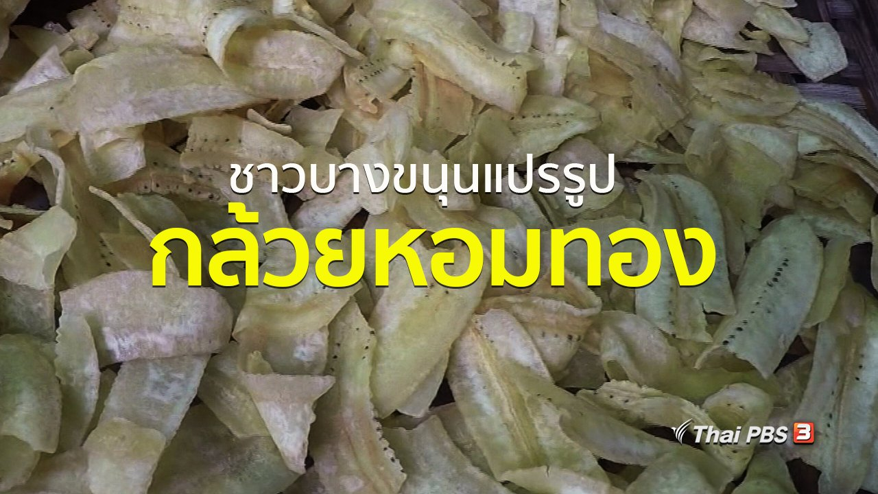 ทุกทิศทั่วไทย - ชุมชนทั่วไทย : ชาวบางขนุนแปรรูปกล้วยหอมทอง