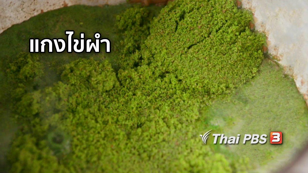 จับตาสถานการณ์ - ตะลุยทั่วไทย : แกงไข่ผำ