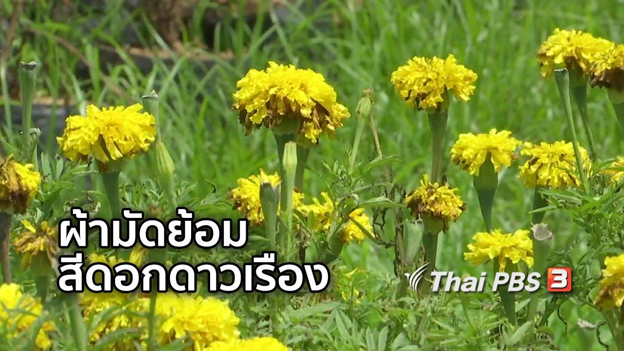 จับตาสถานการณ์ - ตะลุยทั่วไทย : ผ้ามัดย้อมสีดอกดาวเรือง