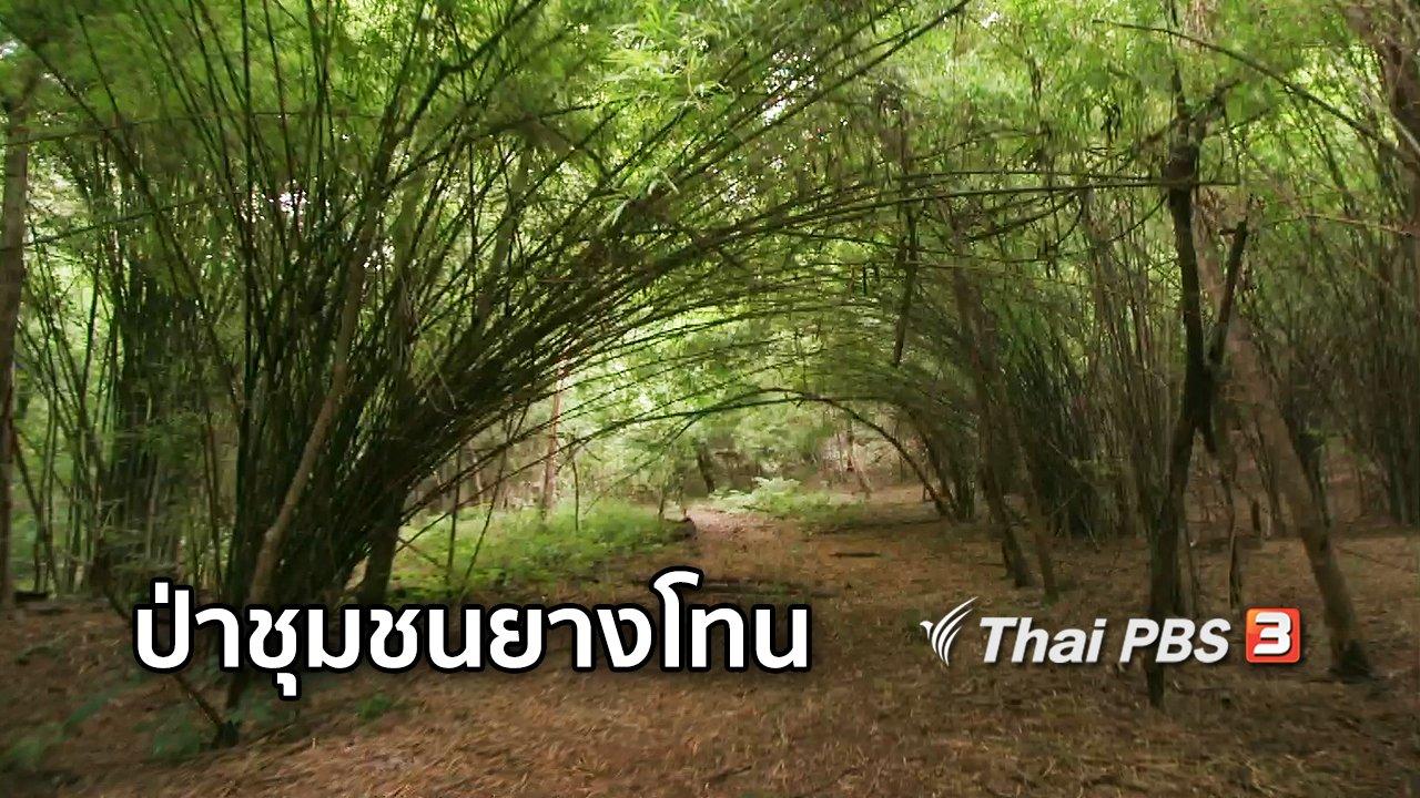 จับตาสถานการณ์ - ตะลุยทั่วไทย : ป่าชุมชนยางโทน