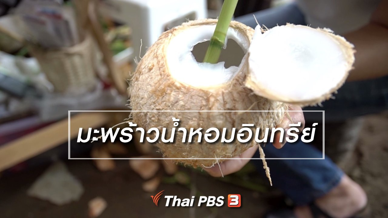 ลุยไม่รู้โรย - สูงวัยไทยแลนด์ : มะพร้าวน้ำหอมอินทรีย์