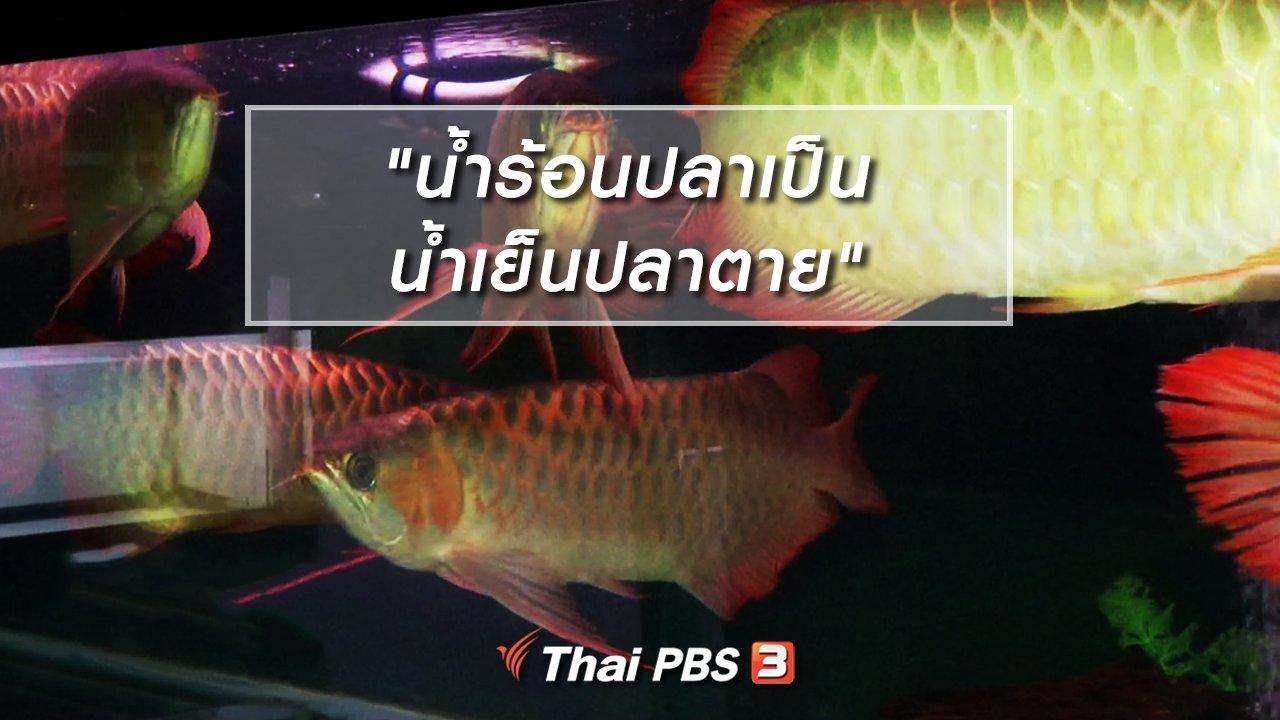 """ไทยบันเทิง - เพียงคำเดียว : """"น้ำร้อนปลาเป็น น้ำเย็นปลาตาย"""""""