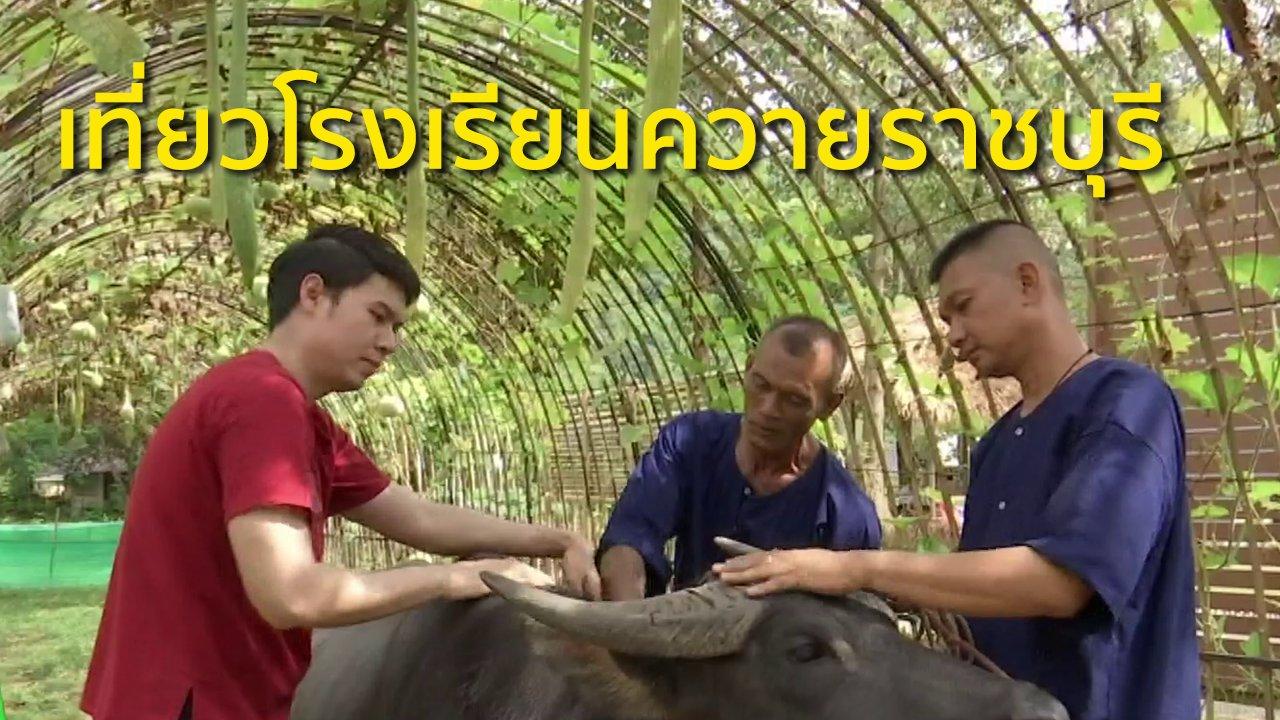 ทุกทิศทั่วไทย - วิถีทั่วไทย : เที่ยวโรงเรียนควายราชบุรี