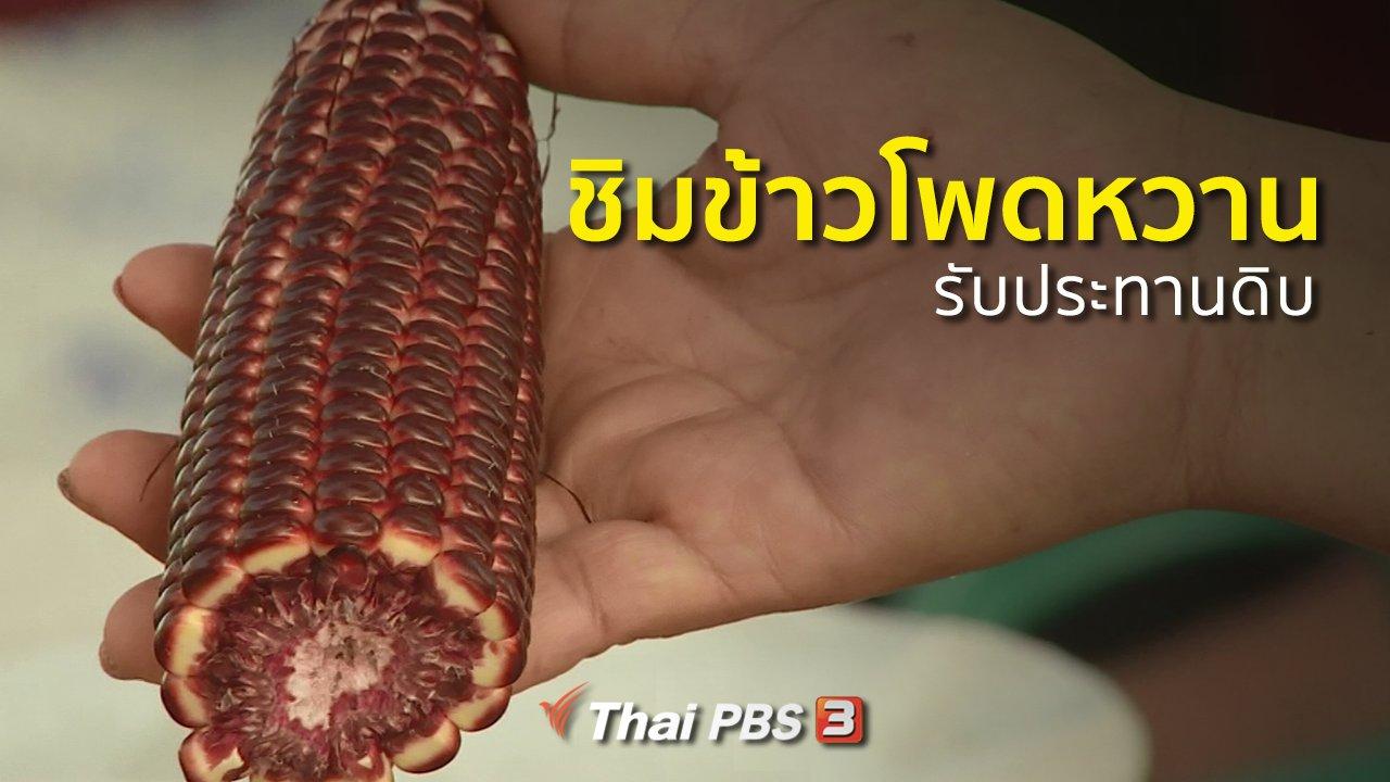 ทุกทิศทั่วไทย - อาชีพทั่วไทย : ชิมข้าวโพดหวานรับประทานดิบ จ.นครสวรรค์