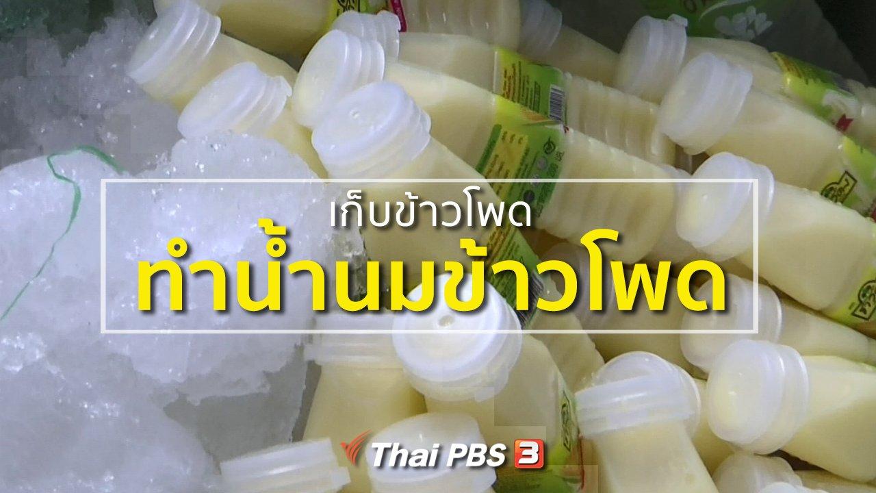 ทุกทิศทั่วไทย - ชุมชนทั่วไทย :  ชาวสระบุรีเก็บข้าวโพดทำน้ำนมข้าวโพด