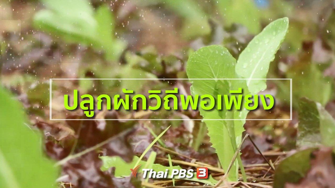 ทุกทิศทั่วไทย - อาชีพทั่วไทย : ปลูกผักวิถีพอเพียง