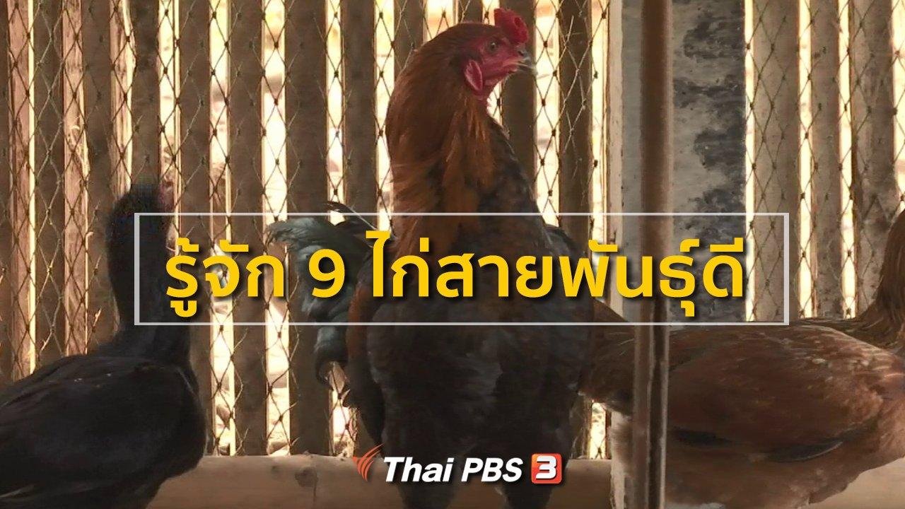 ทุกทิศทั่วไทย - ชุมชนทั่วไทย : รู้จัก 9 ไก่สายพันธุ์ดี