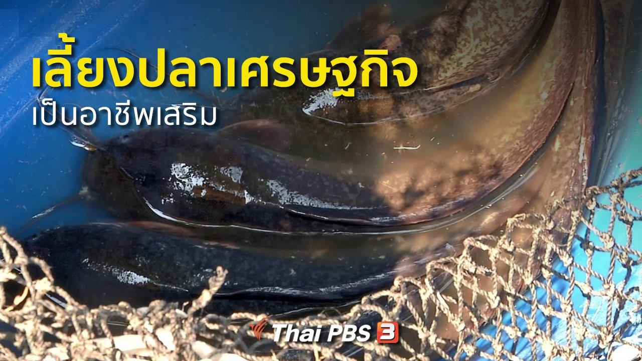 ทุกทิศทั่วไทย - ชุมชนทั่วไทย : เลี้ยงปลาเศรษฐกิจ อาชีพเสริมชาวนาปทุมธานี