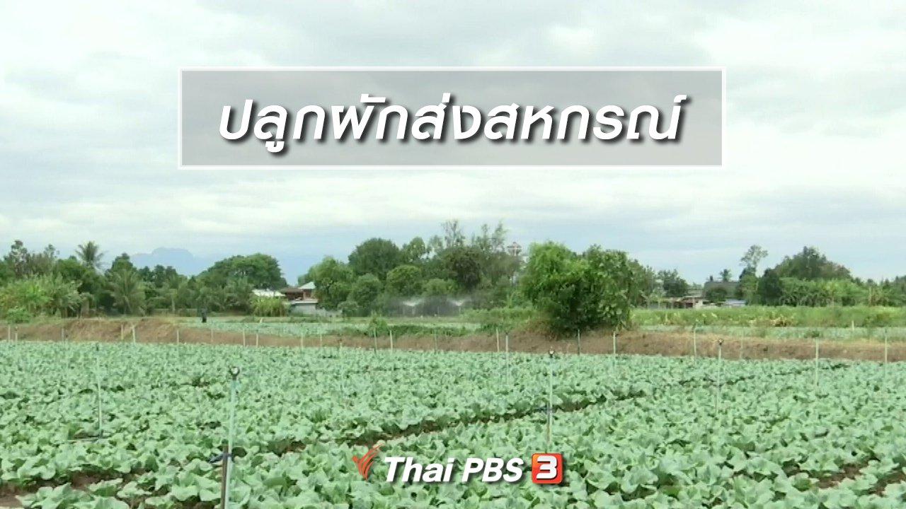 จับตาสถานการณ์ - ตะลุยทั่วไทย : ปลูกผักส่งสหกรณ์