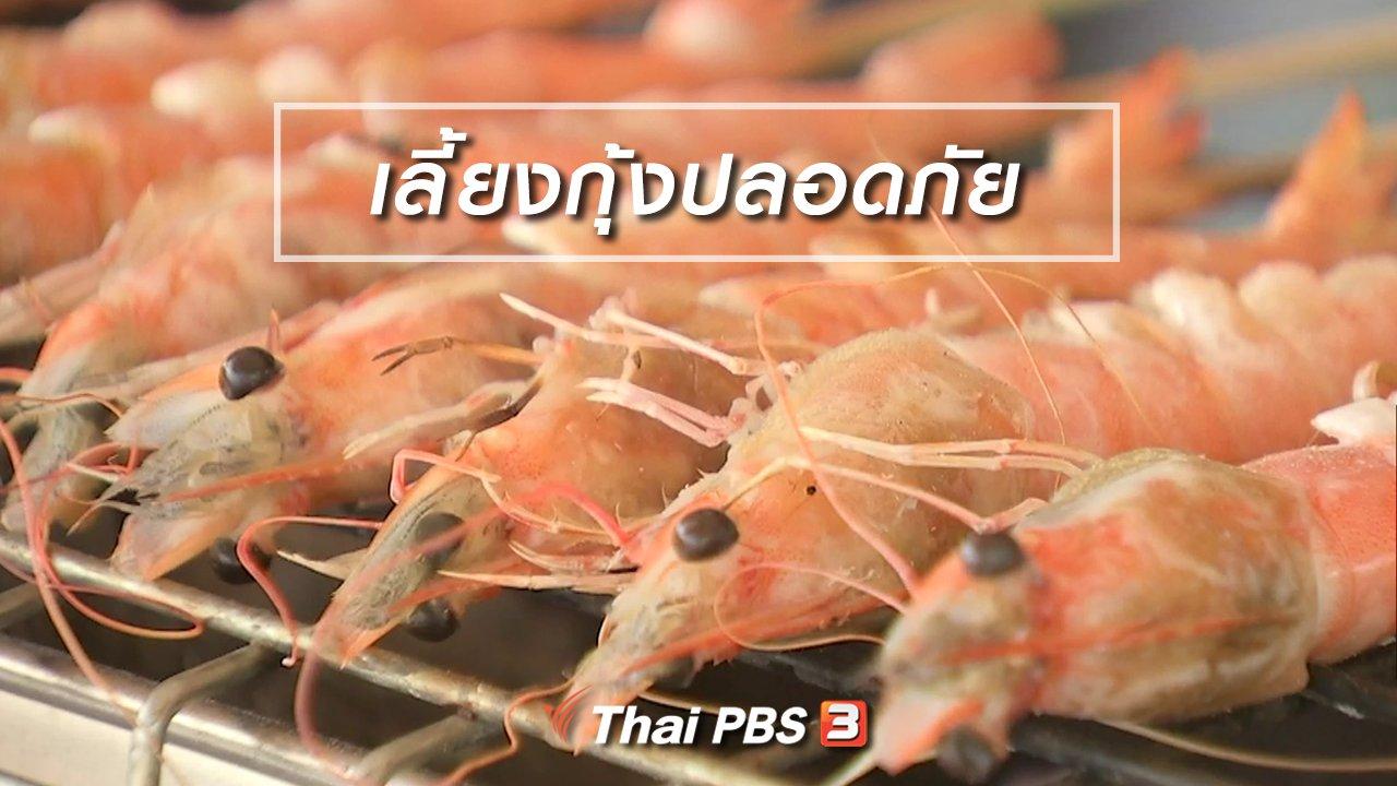 จับตาสถานการณ์ - ตะลุยทั่วไทย : เลี้ยงกุ้งปลอดภัย