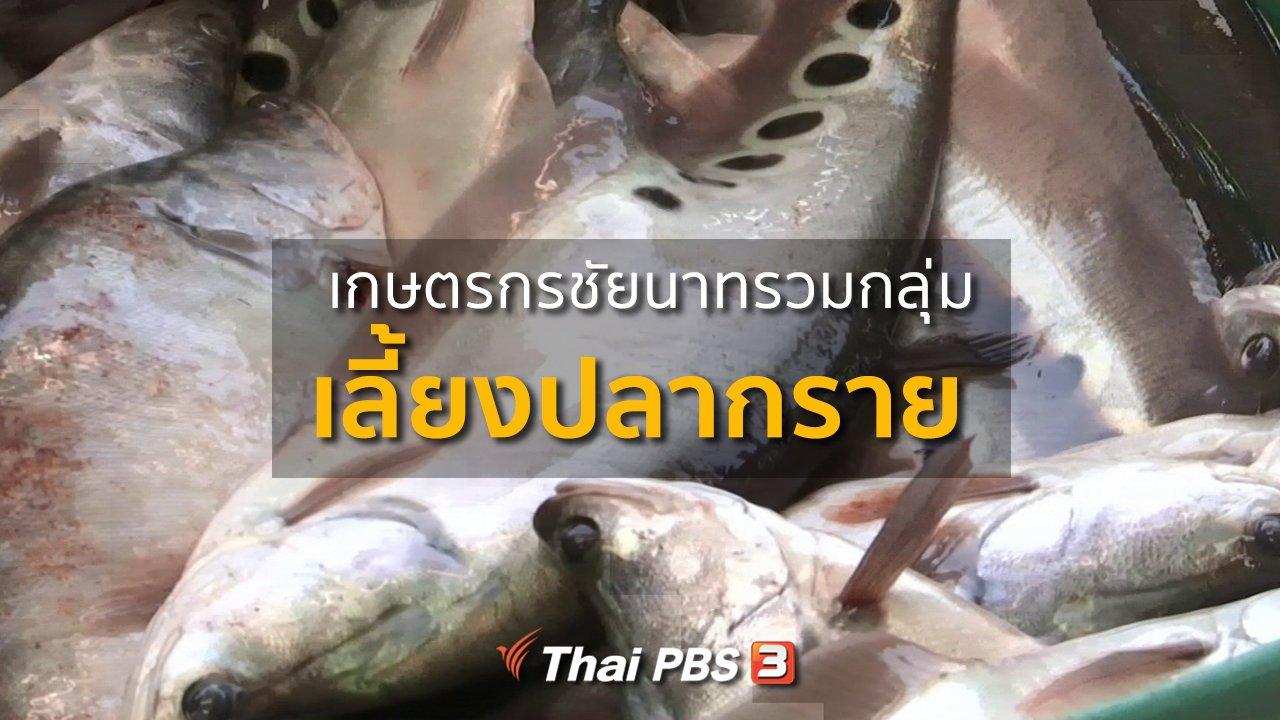 ทุกทิศทั่วไทย - อาชีพทั่วไทย : เกษตรกรชัยนาท รวมกลุ่มเลี้ยงปลากราย