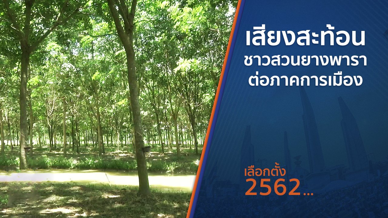 เลือกตั้ง 2562 - เสียงสะท้อนชาวสวนยางพาราต่อภาคการเมือง