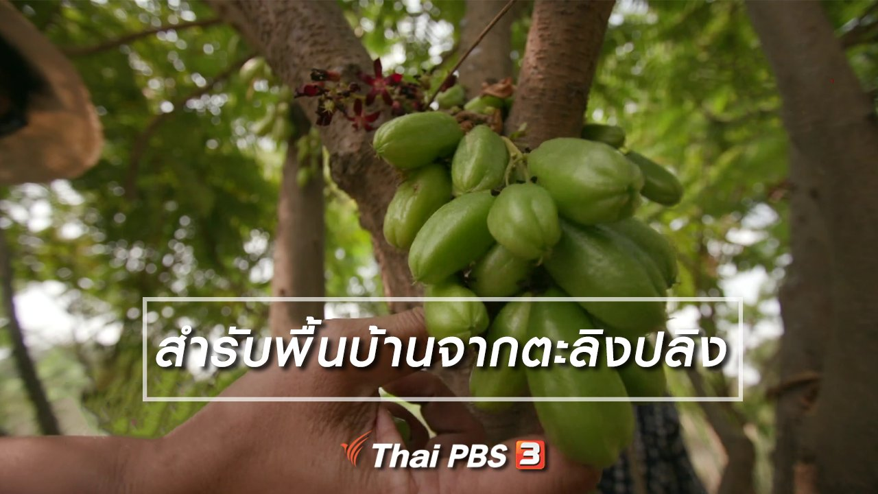 ไทยบันเทิง - อิ่มมนต์รส : สำรับพื้นบ้านจากตะลิงปลิง