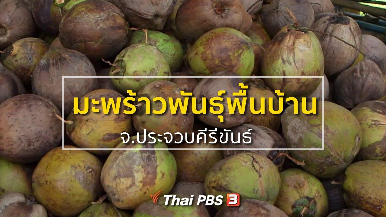 ทุกทิศทั่วไทย - ชุมชนทั่วไทย : พัฒนามะพร้าวพันธุ์พื้นบ้าน จ.ประจวบคีรีขันธ์