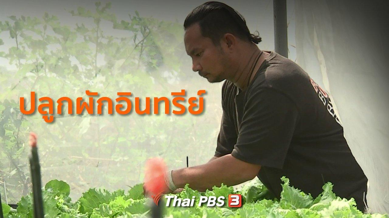 ทุกทิศทั่วไทย - อาชีพทั่วไทย : ปลูกผักอินทรีย์