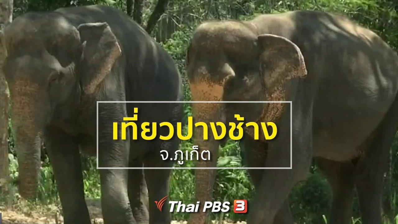 ทุกทิศทั่วไทย - ชุมชนทั่วไทย : เที่ยวปางช้าง จ.ภูเก็ต
