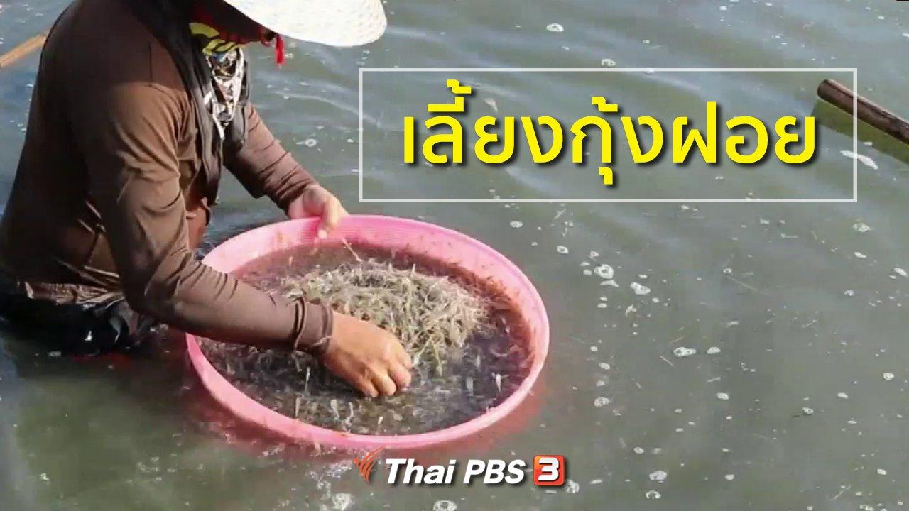ทุกทิศทั่วไทย - อาชีพทั่วไทย : เลี้ยงกุ้งฝอย