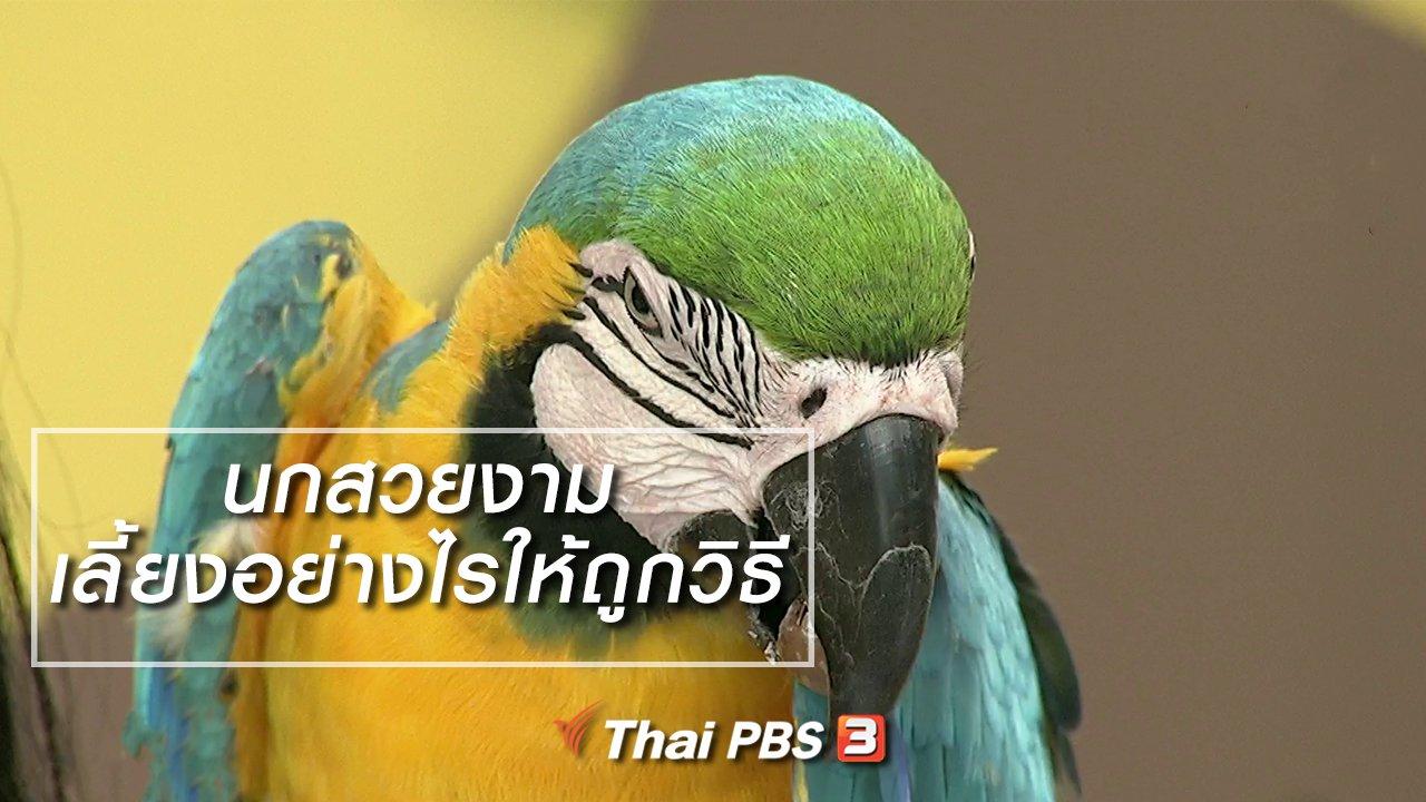 นารีกระจ่าง - นารีสนทนา : นกสวยงามเลี้ยงอย่างไรให้ถูกวิธี