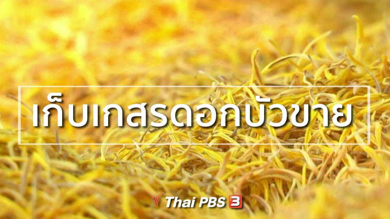 ทุกทิศทั่วไทย - อาชีพทั่วไทย : เก็บเกสรดอกบัวขาย